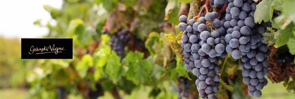 grandi-vigne