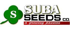 Suba Seeds Condor Quadrivio